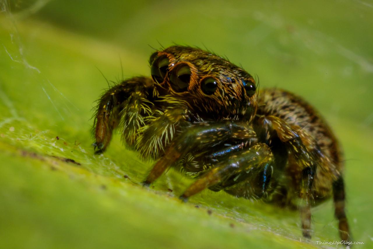 Cute brown spider