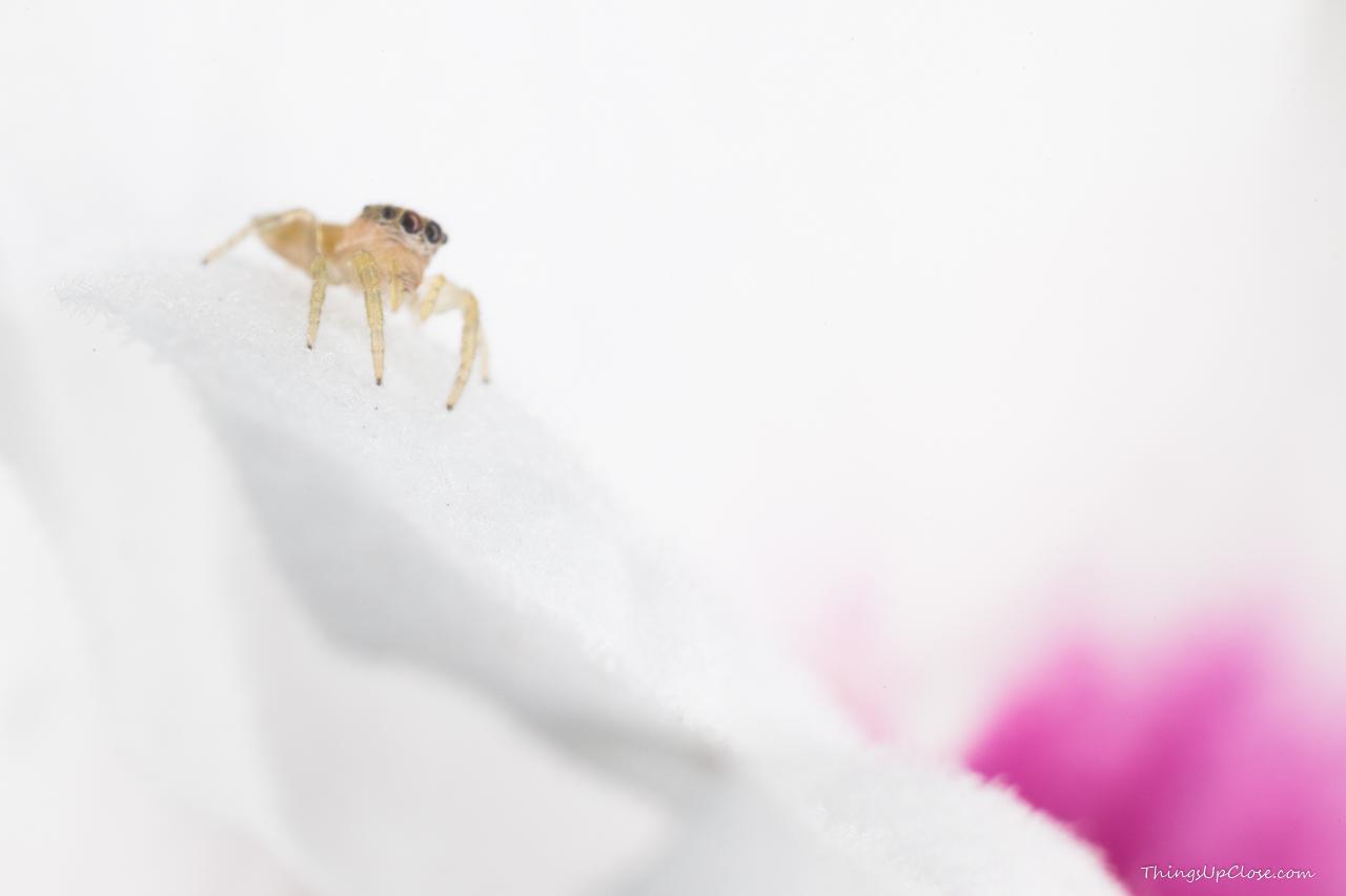 Cute little spider frollicking inside a flower