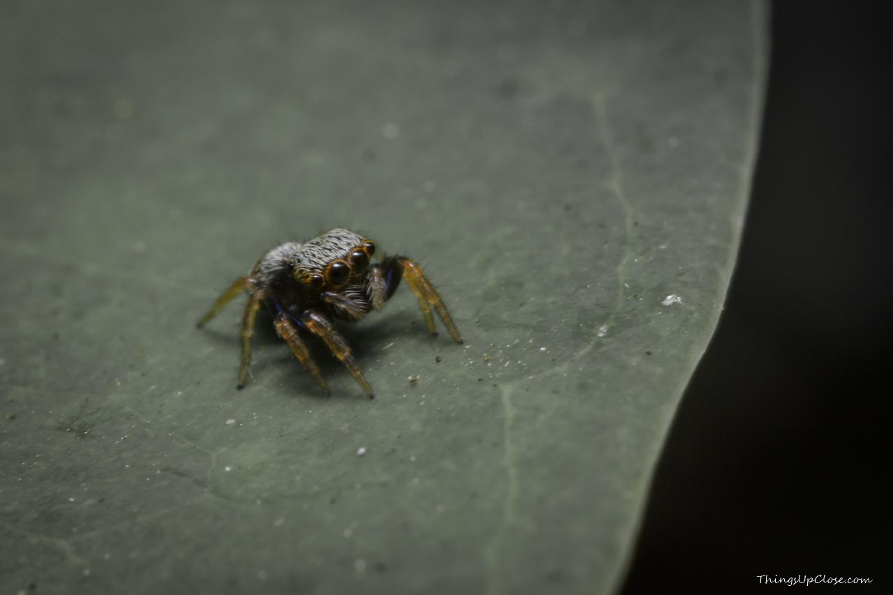 Cute tiny spider