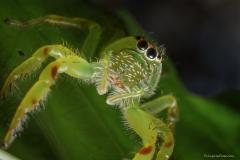Cute green spider
