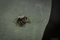 Cute tiny spider