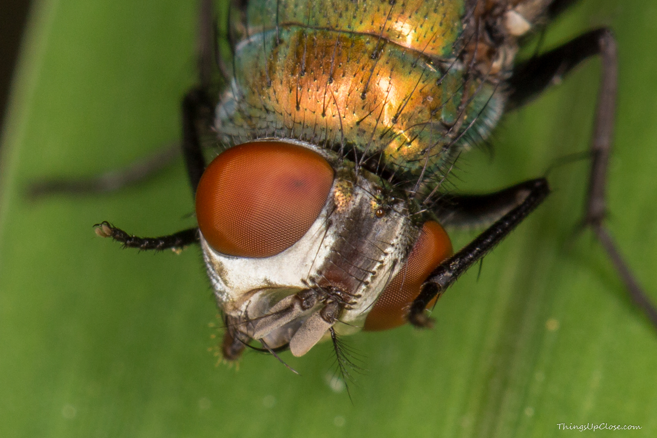 Cropped image showing close up of fly eyes