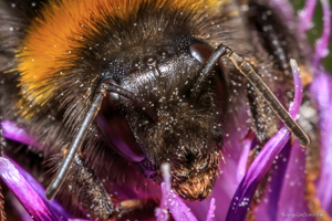 Bee-eyes-300x200-1.jpg